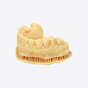 LC-Dental-Dental-Model